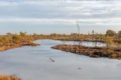 Großes Sumpfheidemoor Kemeri am sonnigen Wintertag mit blauem Himmel, Lettland, Baltische Staaten, Nordeuropa lizenzfreie stockfotografie
