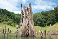 Großes totes Holz im balahala Wald Stockfotos