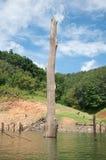 Großes totes Holz im balahala Wald Lizenzfreies Stockbild