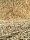 Großes trockenes Stroh im Ackerland stockfotografie