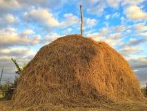 Großes trockenes Stroh im Ackerland stockbilder