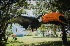 Großes Tukan in Oxapampa Stockfoto