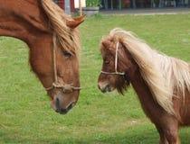 Großes und kleines Pferd Lizenzfreies Stockfoto
