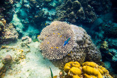 Großes Unterwasserkorallenriff Stockfotografie