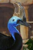 Großes Vogel-Profil Lizenzfreie Stockfotos