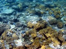Großes Wallriff, Unterwasser Stockfoto