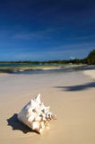 Großes weißes Shell auf einem Sand Lizenzfreie Stockfotografie