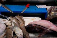 Großgefleckter Katzenhaie auf Fischhändler ` s Marktstall lizenzfreies stockfoto
