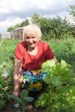 Großmutter, die Salat zeigt Stockfoto