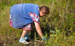 Großmutter reißt das Gras im Garten auseinander stockfoto