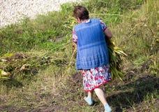 Großmutter reißt das Gras im Garten auseinander lizenzfreies stockbild