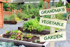 Großmutter ` s Gemüsegarten lizenzfreie stockfotos