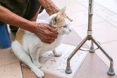 Großmutterspiel mit der Katze lizenzfreie stockbilder