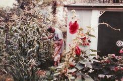 Großvater-und Enkel-Blick über Mais-Ernte stockfotografie