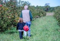 Großvater- und Enkelinsammelnäpfel Lizenzfreie Stockbilder