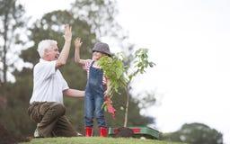 Großvater und Kind, die Baum in der Parkfamilienzusammengehörigkeit pflanzen stockfotografie