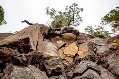 Großartige Ansicht von der Spur über Felsen zur Tanne lizenzfreies stockfoto