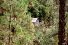Große Ansicht in einen Wald mit einem Haus lizenzfreie stockfotografie