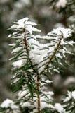 Große Flocken der Nahaufnahme des Schnees auf Niederlassung stockbild