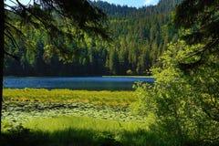 Großer Arbersee是一个湖在Bayerischer瓦尔特,巴伐利亚,德国 免版税库存照片
