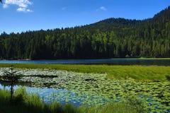 Großer Arbersee是一个湖在Bayerischer瓦尔特,巴伐利亚,德国 库存图片
