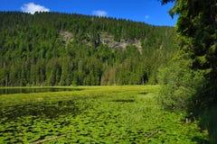 Großer Arbersee是一个湖在Bayerischer瓦尔特,巴伐利亚,德国 免版税图库摄影