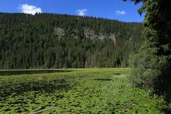 Großer Arbersee是一个湖在Bayerischer瓦尔特,巴伐利亚,德国 免版税库存图片