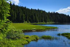 Großer Arbersee è un lago in Bayerischer Wald, Baviera, Germania Fotografie Stock