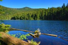 Großer Arbersee é um lago em Bayerischer Wald, Baviera, Alemanha Foto de Stock Royalty Free