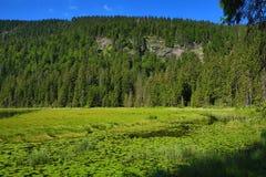 Großer Arbersee jest jeziorem w Bayerischer Wald, Bavaria, Niemcy Fotografia Royalty Free