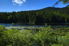 Großer Arbersee jest jeziorem w Bayerischer Wald, Bavaria, Niemcy Obrazy Stock