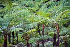 Großer Baumfarn auf Regenwald an Siriphum-Wasserfall an Nationalpark Doi Inthanon, Chiang Mai, Thailand stockbilder