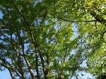 Großer Garten Park Dresden royalty free stock image
