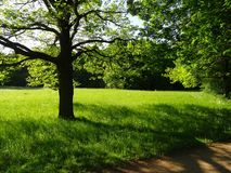 Großer Garten Park Dresden royalty free stock photos