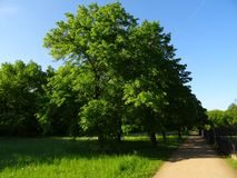 Großer Garten Park Dresden stock photo
