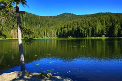 Großer Arbersee is a lake in Bayerischer Wald, Bavaria, Germany Royalty Free Stock Photos