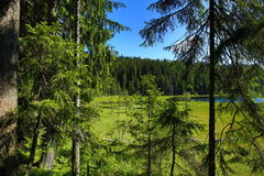 Großer Arbersee is a lake in Bayerischer Wald, Bavaria, Germany Stock Photography