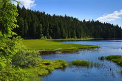 Großer Arbersee is a lake in Bayerischer Wald, Bavaria, Germany Stock Image