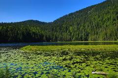 Großer Arbersee is a lake in Bayerischer Wald, Bavaria, Germany Royalty Free Stock Photo