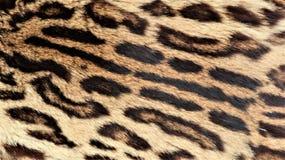 Gro?aufnahme der Haut eines Leoparden lizenzfreie stockbilder