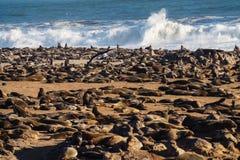 Gro?e Kolonie von S?dafrikanischer Seeb?ren am Kapkreuz in Namibia lizenzfreie stockbilder