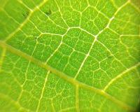 Gro?e sch?ne Tropfen des transparenten Regenwassers auf einem gr?nen Blattmakro Tropfen des Taus gl?hen morgens in die Sonne Sch? stockbild