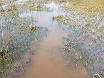 Gro?e Schildkr?te versenkt in schlammiges Wasser mit Anlagen im Feuchtgebiet lizenzfreie stockfotos
