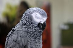 Gro?er sch?ner Papagei, der auf dem K?fig sitzt stockfotografie