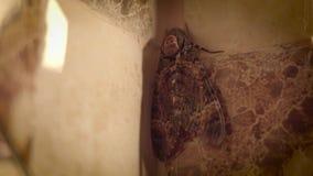 Gro?er Schmetterling im Badezimmer lizenzfreie abbildung
