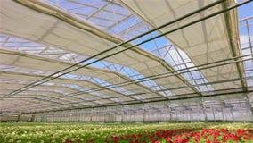 Gro?es modernes Gew?chshaus f?r wachsende Blumen Modernes automatisiertes Glasdach in einem Gewächshaus vor dem hintergrund stock footage