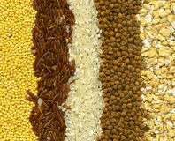 Groats background. Background of different kinds of grains close up royalty free stock image