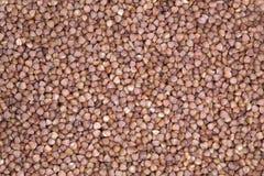 Groats de trigo mourisco que encontram-se uma camada igual Foto de Stock Royalty Free