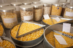 Groats samples in agricultural laboratory Royalty Free Stock Photography