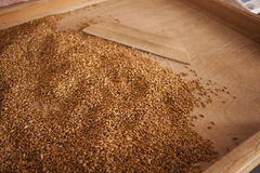 Groats samples in agricultural mill Stock Photo